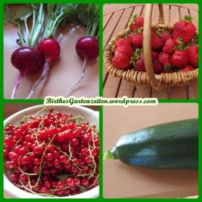 Garten aktuell: Rosen, Mini-Teich, Erste Ernte von Radieschen, Erdbeeren, Johannisb.,Zucchini,
