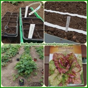 [Gartentagebuch] Der ideale Tag zum Säen von Salat, Radieschen, Erdbeerableger setzen…07.07.14