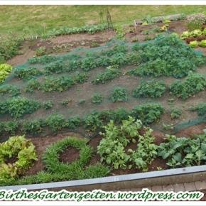 [Garten] Juni-Blick ins Beet – ganz schönvoll…