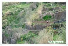 Levada Moinho Ausblick Terrassenfelder (Lombada, Madeira)